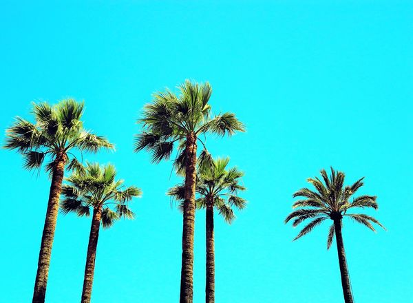 Beauty In Nature Blue Clear Sky Day False Color Fluo  Fluo Colors Low Angle View Miami Colors Nature No People Outdoors Palm Palm Tree Palm Trees Palms Scenics Sky Summer Views Tall Tall - High Tranquil Scene Tranquility Tree Color Palette