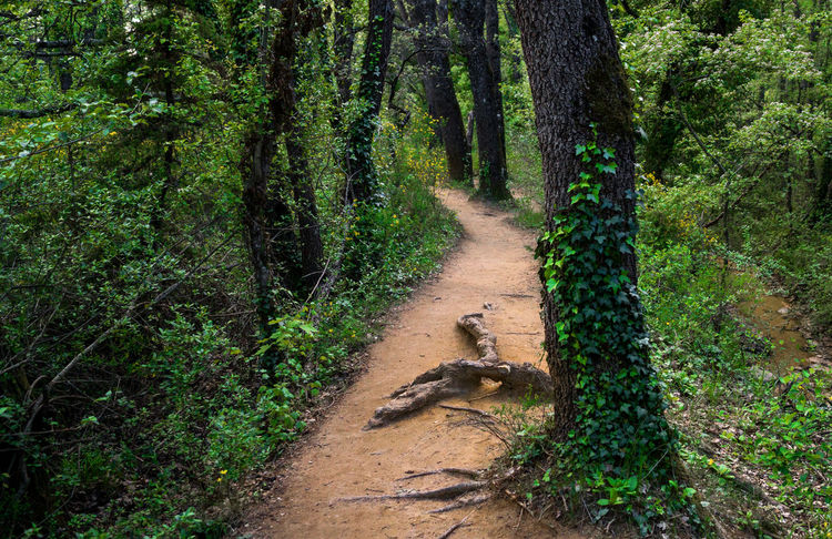 A path through the ochre forest Animals In The Wild Beauty In Nature Day Forest Growth Mammal Nature No People One Animal Outdoors Plant Reptile Scenics Sky Tree Tree Trunk