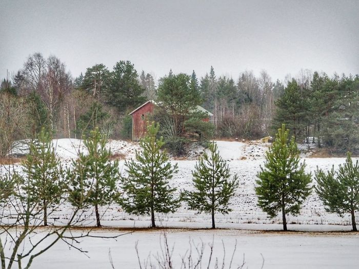 Tree Nature Plant Outdoors Nature Winter Time Winter Fields Wooden Building Winter Nature Outside Snow Covered