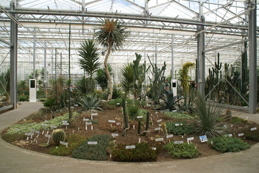 Botanical Gardens Nature Vacations Beauty In Nature Bloom Botanical Day Flower Garden Greenhouse Growth Indoors  Nature No People Palm Tree Plant Plant Nursery Sky Summer Tree Perspectives On Nature