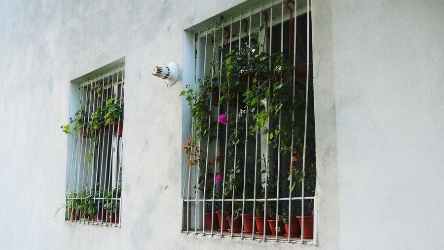Window Windows Flowers Flower Plants Plant Plants And Flowers Neighborhood Neighbourhood Streetphotography Potted Plant Mirrorless Static Nature