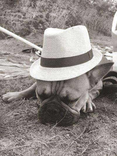 Urlaub2017 Hank Französische Bulldogge