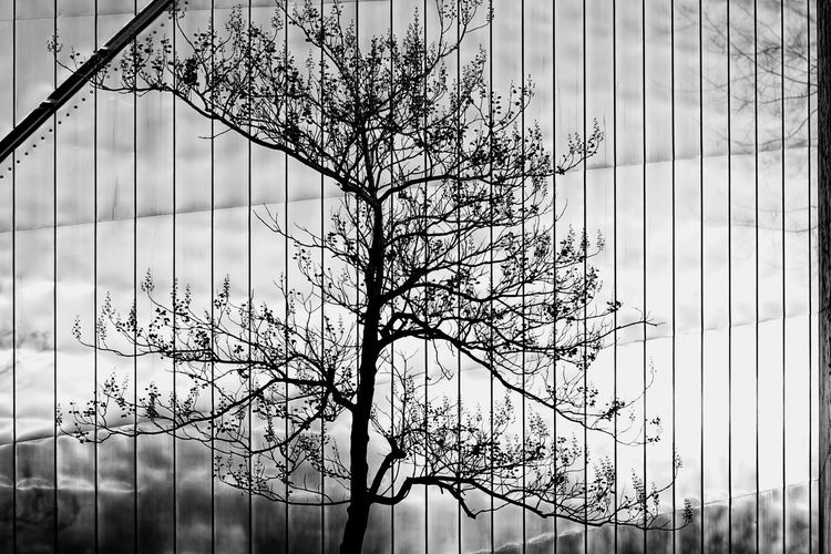 reflection tree Auto Post Production Filter B&w Photography Backgrounds Bare Tree Baum Berlin Black & White Branch Cold Temperature Covering Engineering Full Frame Kreuzberg Metal Metallic No People Pattern Reflection Season  Structure White White Color Winter