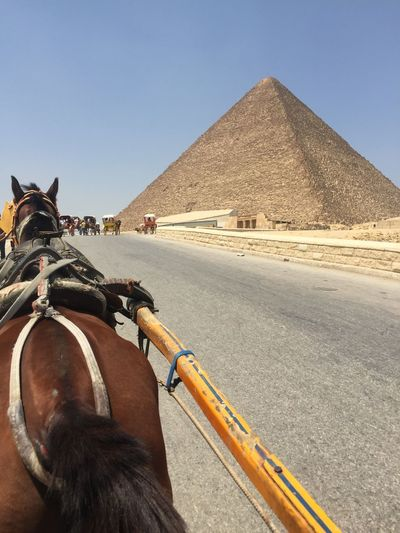 A beautiful horseback ride with a view of the most beautiful wonder of the world, the great pyramid of Giza, Egypt. My home country. Clear Sky Desert Fresh Air Horseriding Pyramids Tourist Travel Wonders Of The World Heritage History Legacy Pharohs Pyramids At Giza Sand Sunny Day Thisisegypt