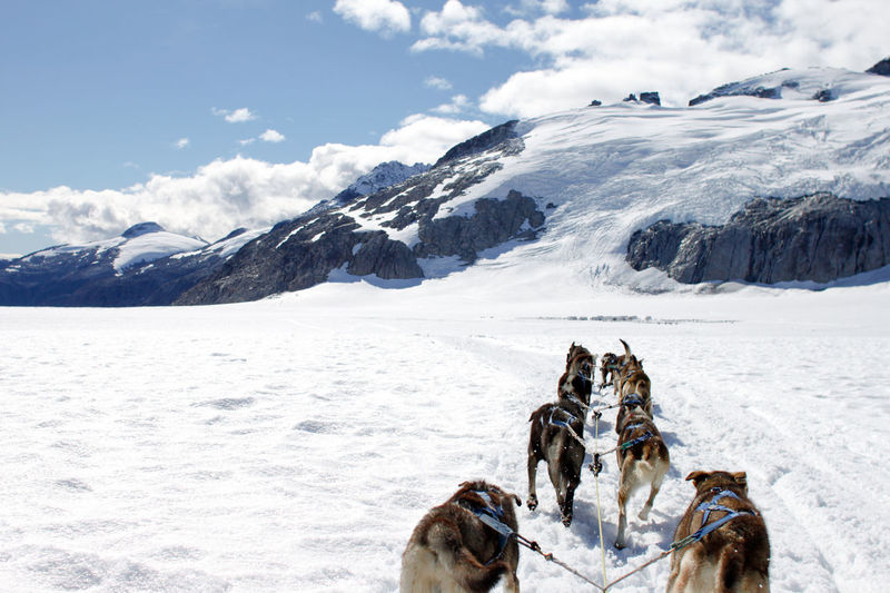 Dogsledding On Snowy Field Against Sky At Glacier Bay National Park