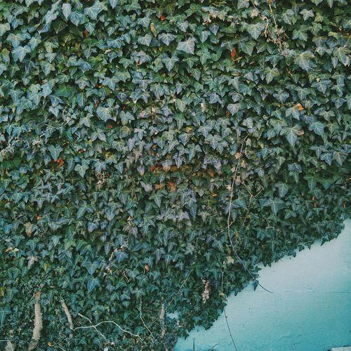 Vertical garden. VSCO Vscocam Nature Green Leaves