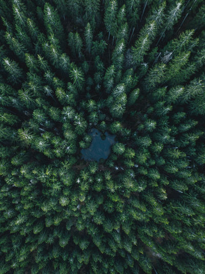 instagram.com/dani.kla Beautiful Beautiful Nature Drone  Nature Nature Photography Backgrounds Beauty Beauty In Nature Beauty In Nature Day Dronephotography Droneshot Forest Freshness Full Frame Green Color Growth Nature Nature Collection No People Outdoors Pinaceae Pine Tree Spruce Tree Tree Fresh On Market 2017