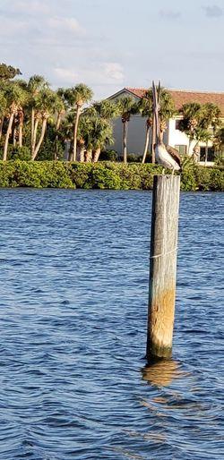 Can A Pelican