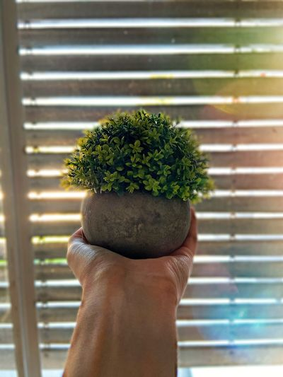 Close-up of person holding potted plant