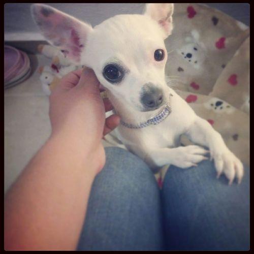 I Love My Dog son miradas unicas, con miles de significados. First Eyeem Photo