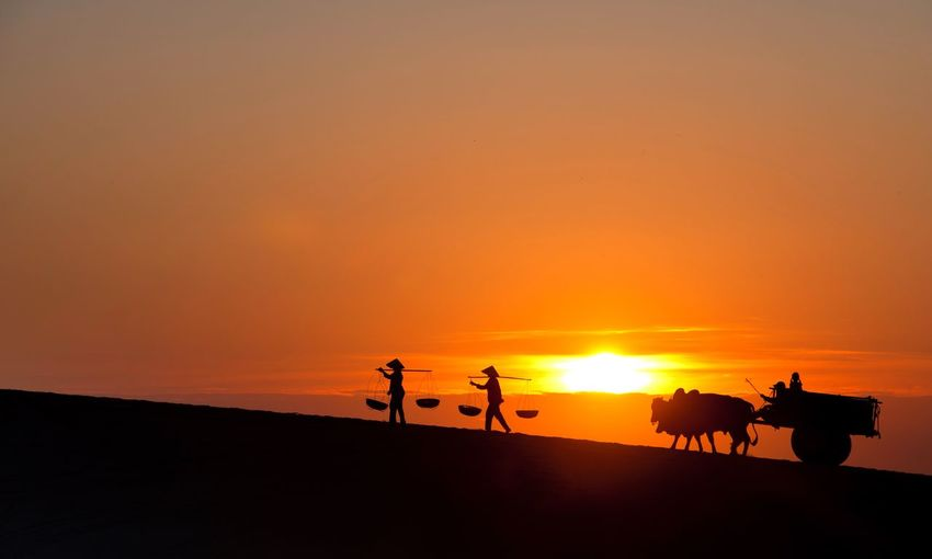 Silhouette people and bull cart on field during sunset