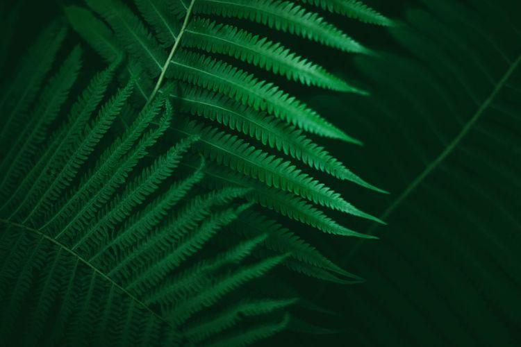 #nature #green