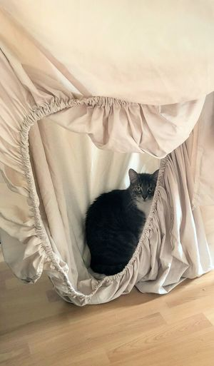 cat hiding in freshly washed bed sheet FUNNY ANIMALS Laundry Washing Bedsheet Cat Cozy Domestic Cat Drying Hiding Home Interior Indoors  Linen