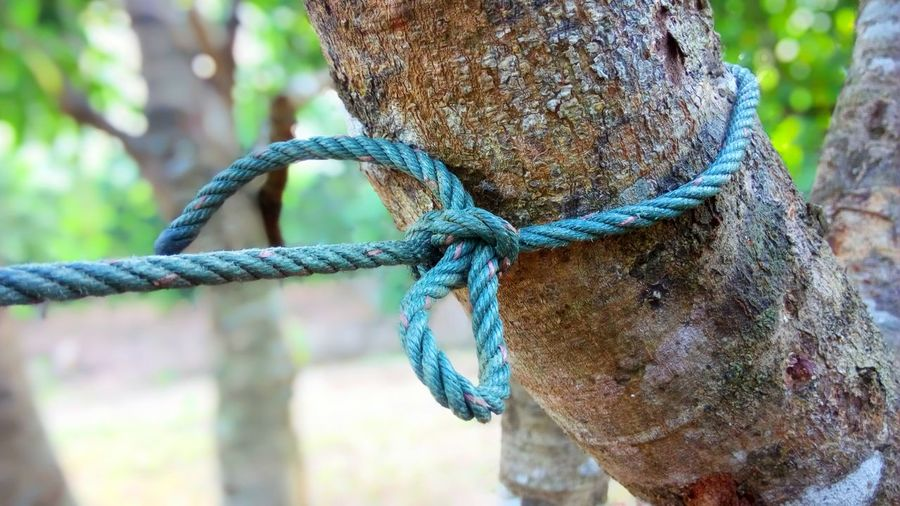 Rope Tied Up Focus On Foreground Metal Colorful Close Up Outdoors Tree Nature Textured  Safety Post Security Tied Knot Protection Twisted Connection Plant Strength Pattern Concept Icon Model Design Shell