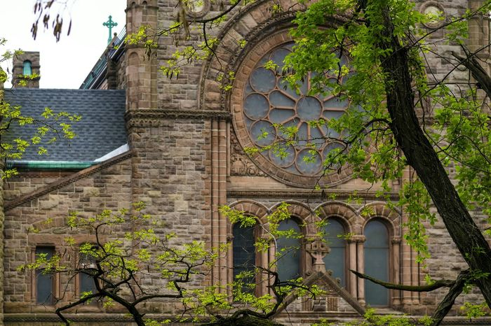 Church windows. Old Architecture Trees And Leaves Church Stained-glass Windows Catholic Church Vivid Sony A6000 365project