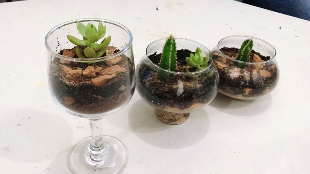Terrarium Nature Natureinglass LifeGreen Plant