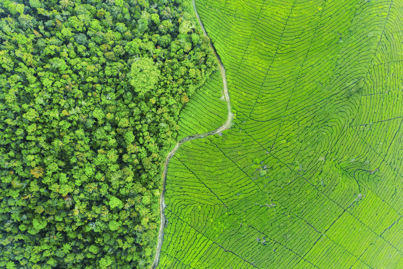 Full frame shot of green landscape