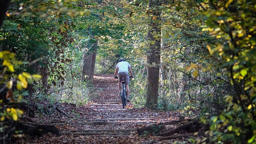 fall rides Adult Alone Beauty In Nature Bike Rider Day Forest Full Length Men Nature One Person Outdoors People Real People Rear View Tree Walking
