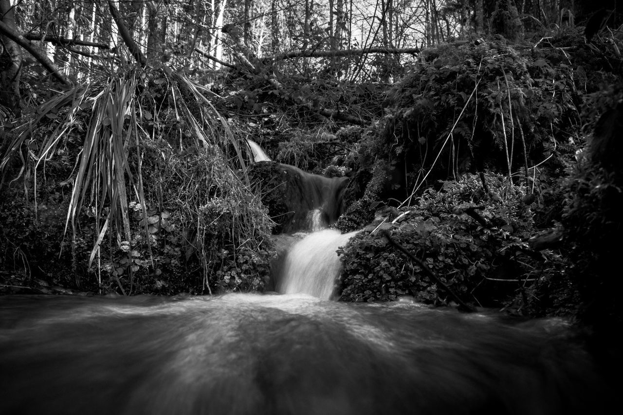 tree, motion, forest, nature, water, long exposure, plant, land, waterfall, blurred motion, flowing water, scenics - nature, no people, beauty in nature, day, rock, flowing, rock - object, solid, outdoors, rainforest, woodland, falling water