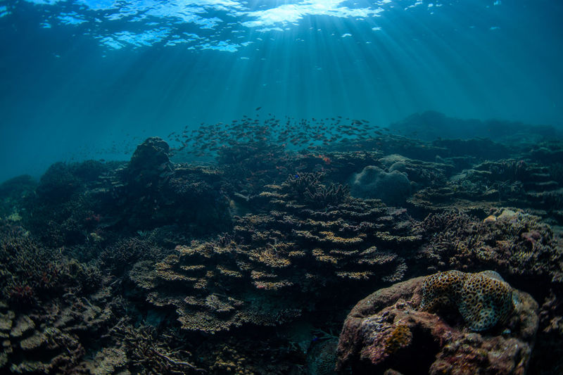 japan Underwater UnderSea Sea Sea Life Water Coral Invertebrate Animal Wildlife Animals In The Wild Marine Animal Nature Animal Themes Sunlight Reef Day No People Outdoors Growth Ecosystem  Purity Underwater Diving