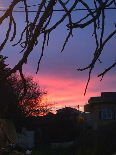 🌸 Sunset