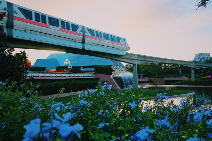 Flower Plant Nature Architecture Built Structure Bridge - Man Made Structure Day Outdoors Growth No People Beauty In Nature Fragility Sky Water Freshness Disney World Walt Disney World Disney Epcot Monorail