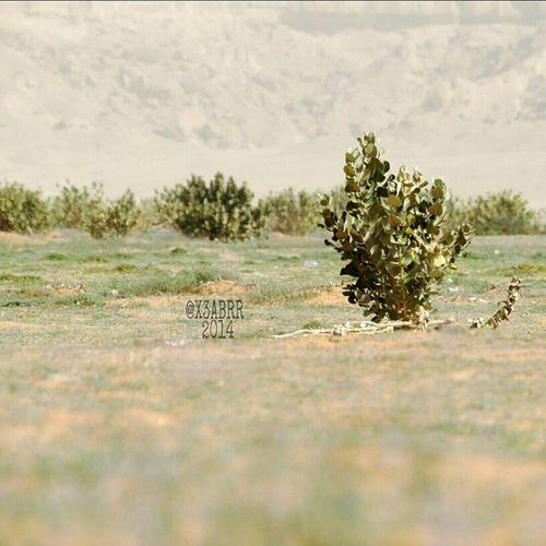 روضة_الخفس HDR Nature Photography تصويري  Nature صباح_الخير صورة Photo Goodevening  Good_evening مساءالخير مساء الخير  مسهم_بالخير طبيعه لاندسكيب Landscape Panorama صور Photos Picsart السعودية  Saudi Arabia Saudiarabia KSA