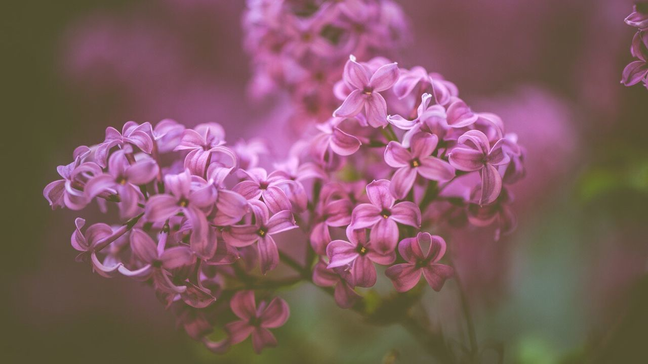 flower, nature, beauty in nature, growth, fragility, close-up, petal, focus on foreground, plant, no people, blooming, freshness, outdoors, day, flower head