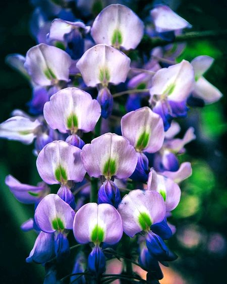 Flower Head Flower Purple Petal Scented Close-up Plant Plant Life