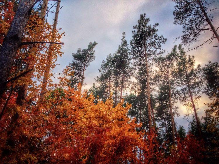 Zadonsk Autumn Relax Nature Задонск, Лес у электроподстанции, на выезде в Липецк