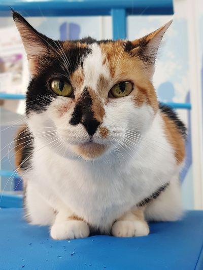 nice tabby cat