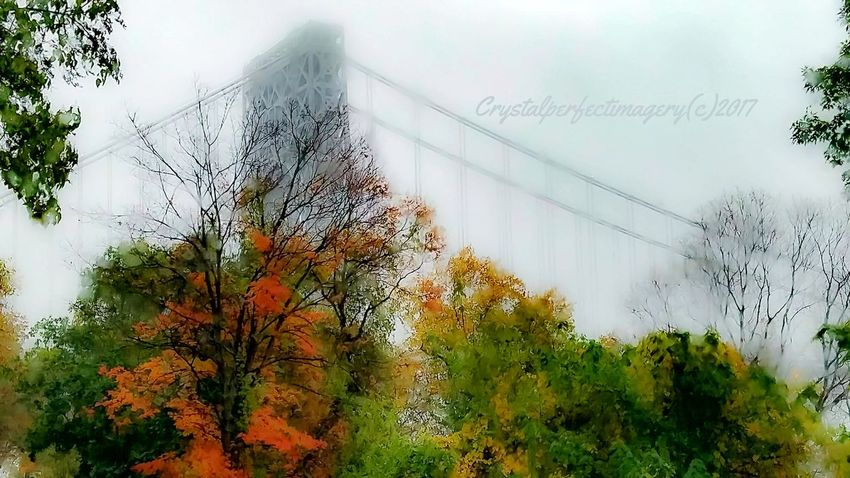 Just another sponge splash day. Tranquil Scene George Washington Bridge Palisades State Park Tree Outdoors Day No People Nature Sky Beauty In Nature Pixelated