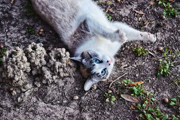 aww,didn't catch anything😐 High Angle View One Animal Day Animal Themes No People Outdoors Domestic Cat Pets Domestic Animals Mammal Nature Close-up South Louisiana White Cat Dirt Crawfishhole