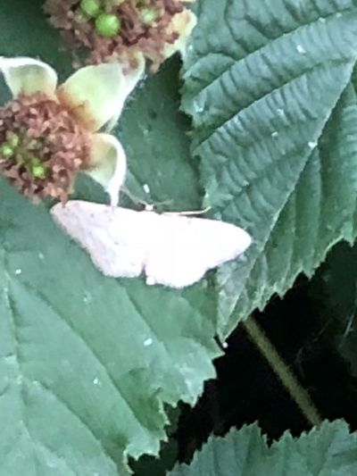 White 🦋 butterfly Ronce Butterfly💓 Leaf Plant Part Plant Close-up Growth Beauty In Nature Nature Green Color No People White Color Freshness Flower Water Vulnerability  Fragility