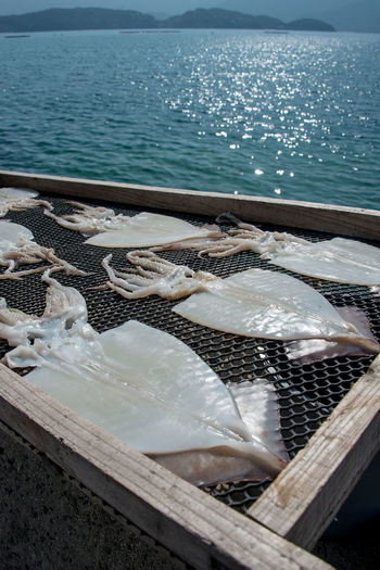High angle view of squids drying on metal grate by sea
