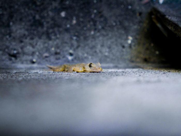 Close-up of lizard on floor