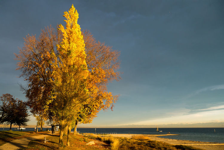Autumn Tree Water Beauty In Nature Sky Tranquil Scene Idyllic No People Outdoors Nature Bodensee My Country In A Photo Blue Sky Lake Of Constance Germany Konstanz Plant Day Perfect Day Perfect Moment Holiday Moments