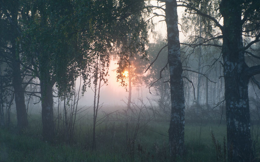 5 a.m. and absolute silence Beauty In Nature Fog Forest Forest Fire Growth Landscape Nature No People Outdoors Sun Sunset Tranquility Tree Tree Area