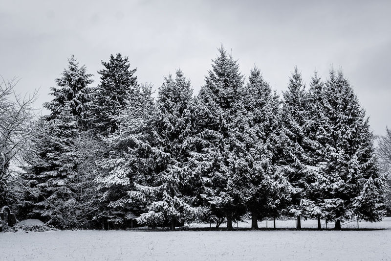 snowy trees Beauty In Nature Day Landscape Nature Outdoors Sky Snow Tree Winter