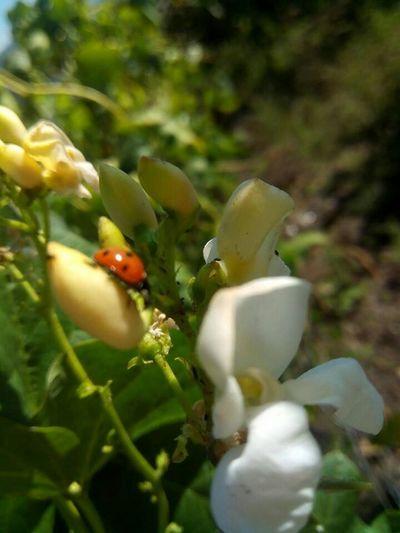 Ladybug Ladybuggalicia LadyBugLove Ladybugspain