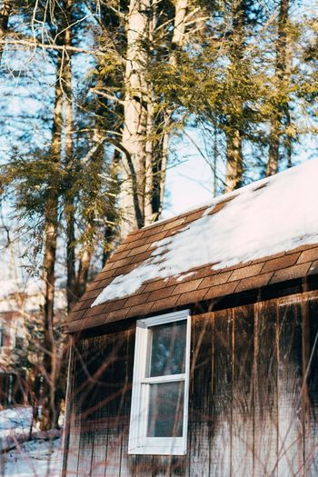 Tree Winter Log Cabin Wood - Material Outdoors Snow No People Cold Temperature Day Built Structure Forest Nature Building Exterior Architecture Beauty In Nature Sky