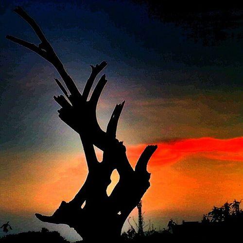 Rsa_nature Rsa_trees Rsa_nature