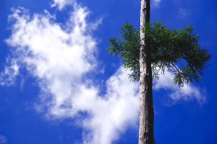 Laten we een waterval zien Beauty In Nature Blue Cloud - Sky Day Growth Low Angle View Nature No People Outdoors Pain Tree Palm Tree Scenics Sky Sunlight Tree Tree Trunk