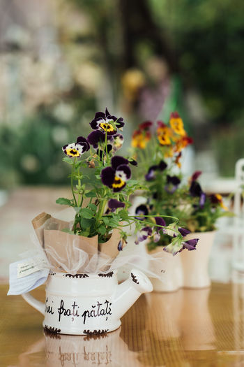 Pansy Bouquet Close-up Communication Day Flower Flower Head Focus On Foreground Fragility Freshness Indoors  Nature No People Pansy Plant Spring Flowers Text Witness Gift