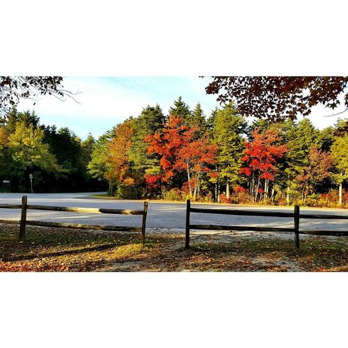 Check This Out Fall Beauty Fall Colors Fall Season Beautiful Enjoying Life Beauty In Nature