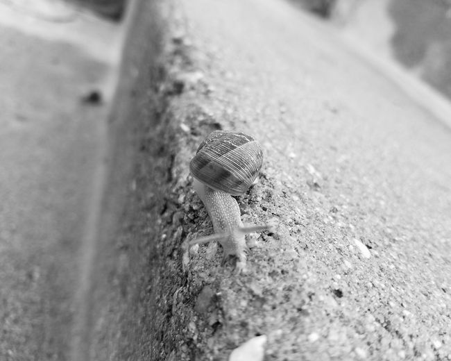 Dramatic Angles TakeoverContrast Monochrome Snail One Animal Animals In The Wild Wildlife Close-up Zoology