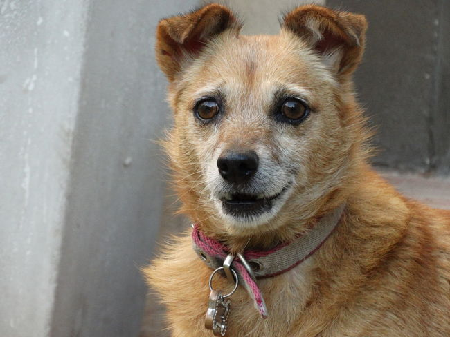 Simona One Animal Dog Domestic Animals Looking At Camera