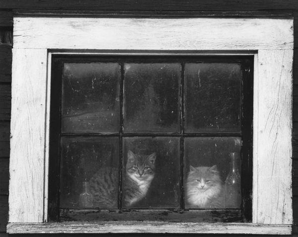Barn cats Animal Themes Barn Cats Barn Window Feline Looking At Camera Old Window Frame Old Window Glass Window
