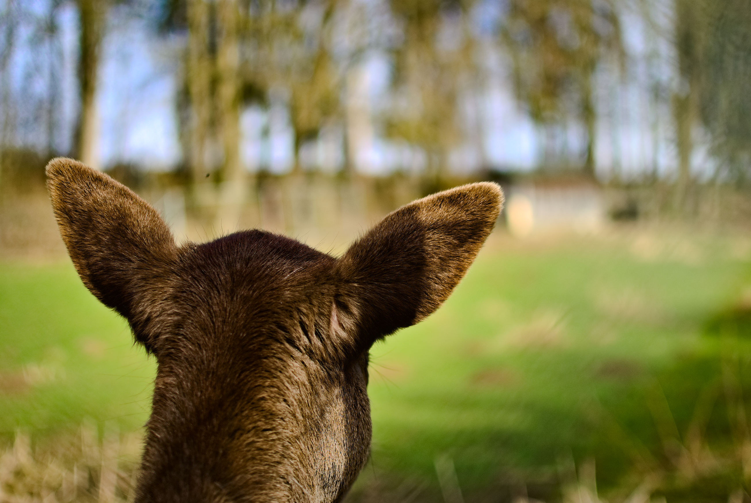 one animal, animal, mammal, animal themes, domestic animals, plant, vertebrate, focus on foreground, land, nature, pets, no people, domestic, grass, animal body part, field, day, close-up, animal ear, green color, animal head, outdoors, herbivorous