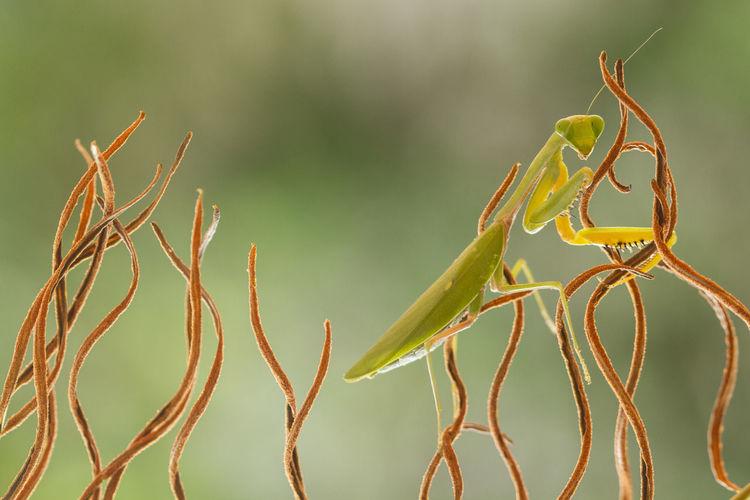 Close-up of praying mantis on plant